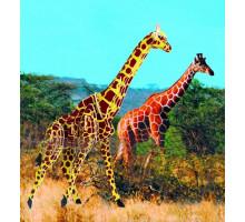 Жираф, цветной (М020с МДИ)