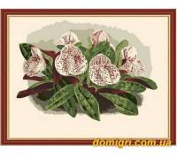 Рисование по номерам - Цветы, фрукты - Орхидеи 1 (MG208 Идейка)