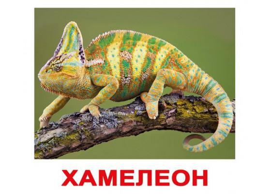 Карточки по Доману - Экзотические животные (Вундеркинд с пеленок)