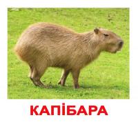 Картки по Доману - Екзотичні тварини (Вундеркинд с пеленок)