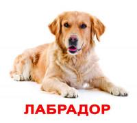 Карточки по Доману - Породы собак (Вундеркинд с пеленок)