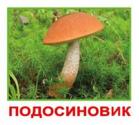 Карточки по Доману Мини-20 - Грибы (Вундеркинд с пеленок)