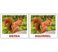 Карточки по Доману Мини-40 (Рус/Англ) - Дикие жив./Wild animals (Вундеркинд с пеленок)