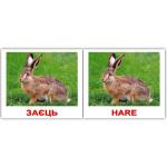 Картки по Доману Міні-40 (Укр/Англ) - Дикі тварини/Wild animals (Вундеркинд с пеленок)
