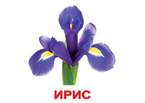Карточки по Доману - Цветы (Вундеркинд с пеленок)