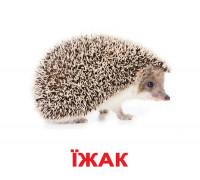 Картки по Доману - Дикі тварини (Вундеркинд с пеленок)