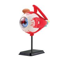 Набір для досліджень Модель очного яблука збірна Edu-Toys