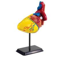 Набір для досліджень Модель серця людини збірна Edu-Toys