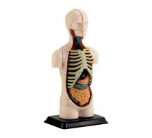 Набір для досліджень Модель тулуба людини збірна Edu-Toys